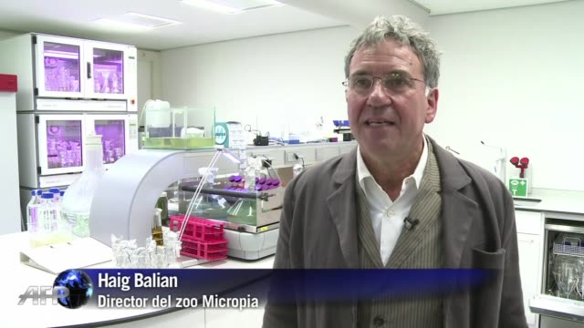 micropia es el primer zoo interactivo de microbios - biologia stock videos & royalty-free footage