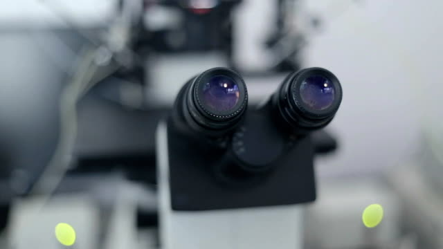 microscope for artificial insemination. - artificial insemination stock videos & royalty-free footage