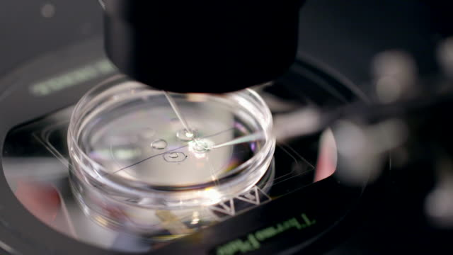 cu microscope lens moving over samples - less than 10 seconds stock videos & royalty-free footage