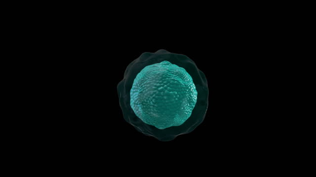 microscope of red human cell. matte - image technique, alpha channel. - alpha cell stock videos & royalty-free footage