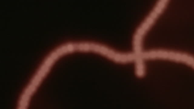 Microscopic bacterium under red light