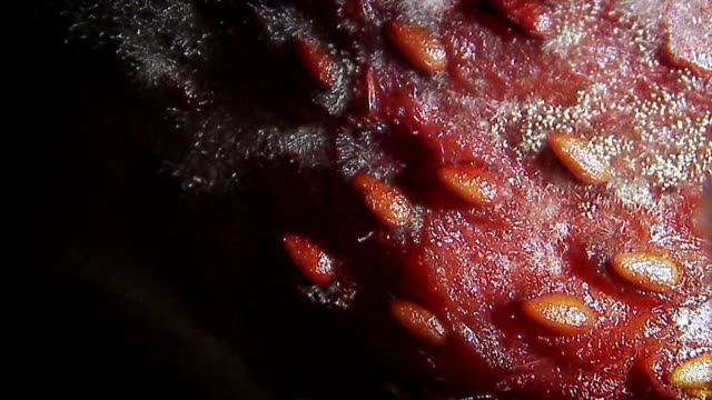 microscopic footage of mould on a strawberry - rotting stock videos and b-roll footage
