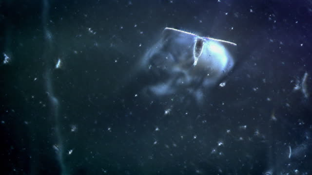 microscopic footage of plankton - magnification stock videos & royalty-free footage