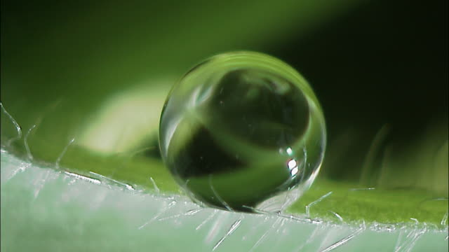 microscopic organisms swim around in droplet of water on leaf, england - water stock videos & royalty-free footage