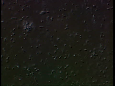 microscopic, salmonella typhimureum bacteria - salmonella stock videos & royalty-free footage