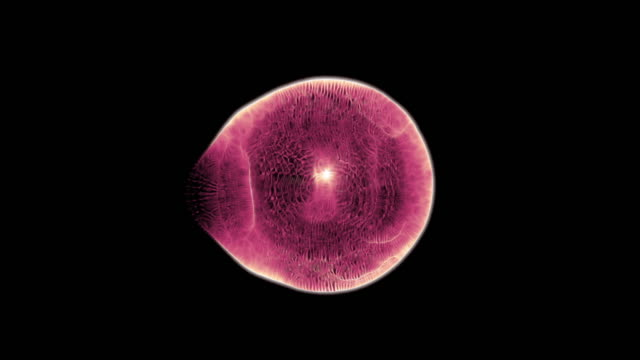 a microscopic single cell (loop). - magnification stock videos & royalty-free footage