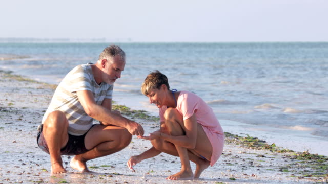 mid adult couple collecting sea shells on beach - seashell stock videos & royalty-free footage