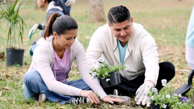 mid adult couple plant flowers together for a community outreach project - environmentalist stock videos & royalty-free footage