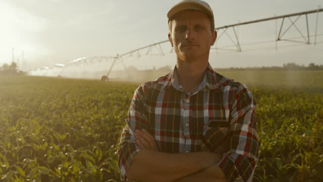 slo mo mid adult farmer posing with arms crossed in the middle of irrigated field of corn - plaid shirt stock videos & royalty-free footage