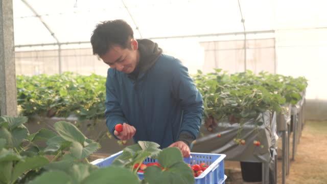 中年の農家動作の温室 - 農作業点の映像素材/bロール