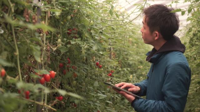 中年の農家動作の温室 - 農業点の映像素材/bロール