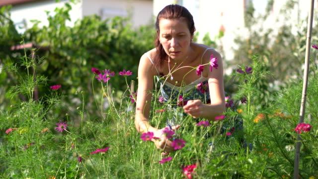 mid adult female gardener caring flower - pruning shears stock videos & royalty-free footage