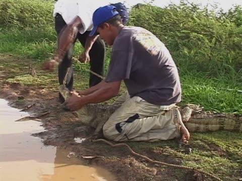mid adult man and a teenage boy releasing a crocodile - 野球帽点の映像素材/bロール