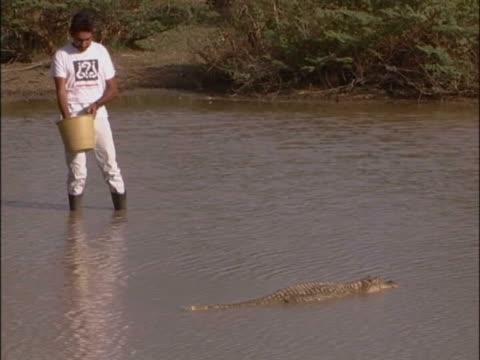 vídeos de stock e filmes b-roll de mid adult man feeding a crocodile - rasto de movimento