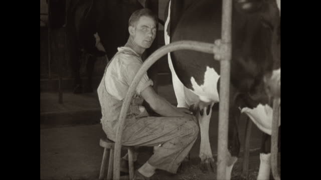 MS Mid adult man milking cow in barn / United States