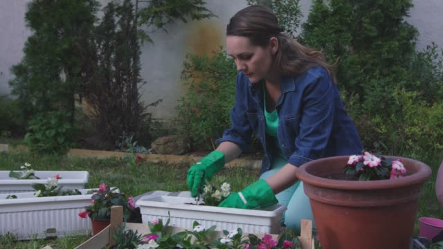 vídeos de stock e filmes b-roll de mid adult woman enjoying a beautiful spring day re-potting flowers in her back yard - colocar planta em vaso