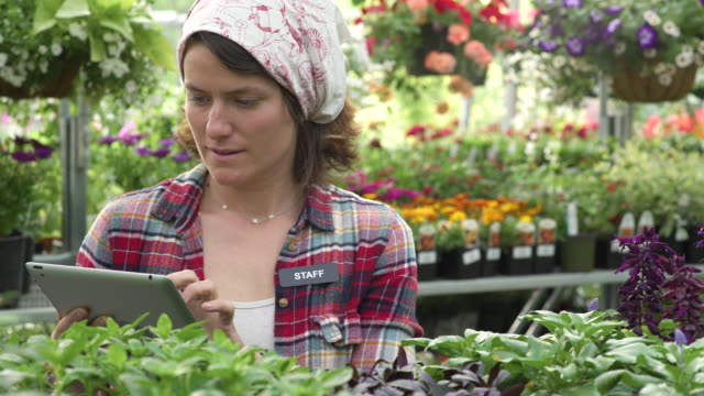 mid adult woman working with a tablet in a greenhouse - whidbey island shop stock videos and b-roll footage