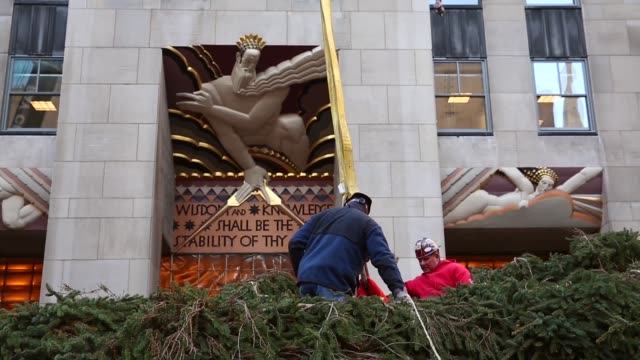 mid shot a 76foot tall norway spruce from shelton ct is lifted into position as the 2013 rockefeller center christmas tree on november 8 2013 in new... - rockefeller center christmas tree stock videos & royalty-free footage