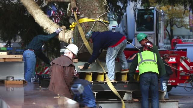 mid shot, a 76-foot tall norway spruce, from shelton, ct, is lifted into position as the 2013 rockefeller center christmas tree on november 8, 2013... - rockefeller center christmas tree stock videos & royalty-free footage