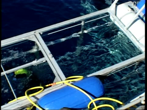 mid shot diver stepping into shark cage from topside, guadalupe island, pacific ocean - tauchgerät stock-videos und b-roll-filmmaterial