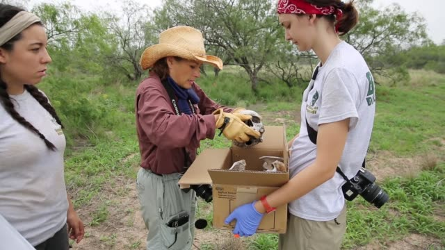 vídeos de stock, filmes e b-roll de mid shot forensic anthropologist dr. lori baker from baylor university collects bones of a suspected undocumented immigrant found on ranchland.... - tribo norte americana