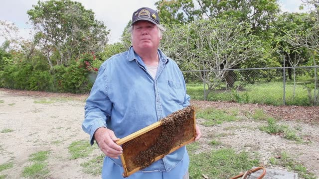mid shot john with healthy apiary element explains what an impact the infestation has on his business honeybees endangered as colony collapse... - infestation stock-videos und b-roll-filmmaterial