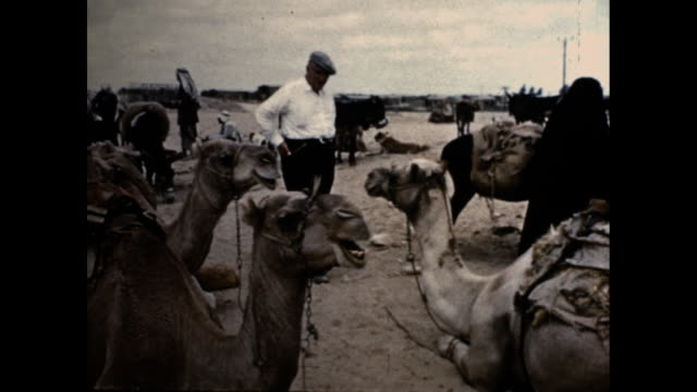 mid shot of a white man interacting with camels and bedouins in 1950's israel. - ベドウィン族点の映像素材/bロール