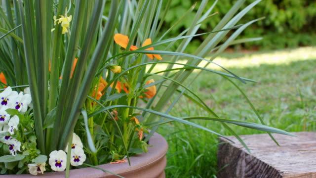 mid shot of bright flowers in a garden. - 園芸学点の映像素材/bロール