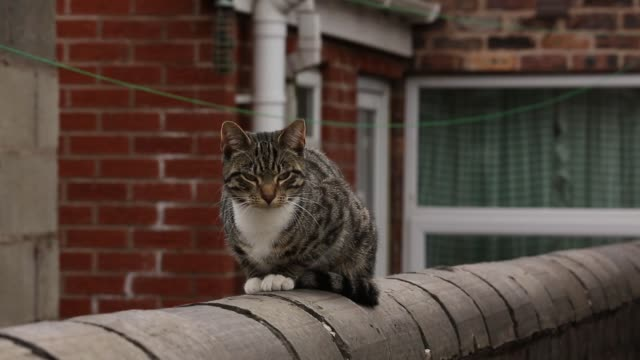vidéos et rushes de mid shot of cat sitting on fence derelict houses in stoke up for auction on april 23 2013 in stoke england mid shot of cat sitting on fence derelict... - a l'abandon