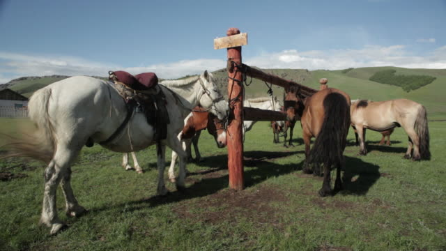 mid shot of horses tied to a large hitching rail - ranch icon stock videos & royalty-free footage