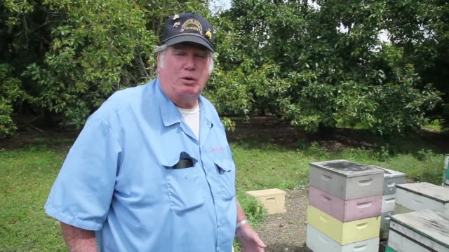 mid shot of john pan to steve john and steve explain why it is so difficult to be a beekeeper these days honeybees endangered as colony collapse... - pollination stock videos & royalty-free footage