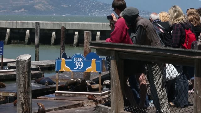 mid shot of spectators watching sea lions. sea lions at san francisco's pier 39 on may 31, 2013 in san francisco, california - see other clips from this shoot 31 stock videos & royalty-free footage