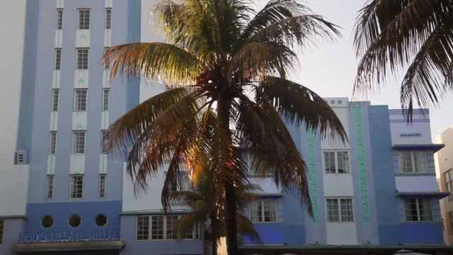 mid shot palm tree in front of park central hotel in miami restrictions will cost florida about $1 billion in lost revenue it was calculated that... - the lost tree stock videos and b-roll footage