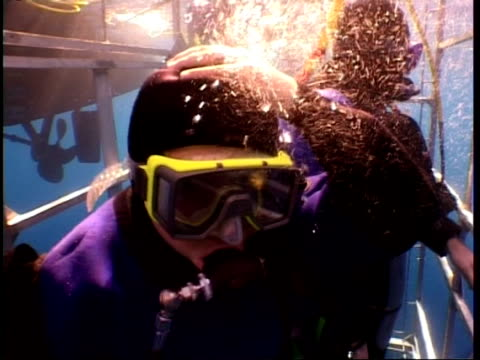 mid shot to close up divers in shark cage, guadalupe island, pacific ocean - aqualung diving equipment stock videos & royalty-free footage