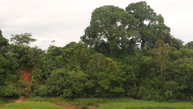 vídeos de stock, filmes e b-roll de mid tracking shot the amazon rainforest view from riverboat a transport riverboat travels in the brazilian amazon from maues to manaus on november 27... - amazonas state brazil