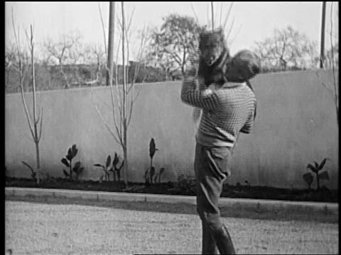 b/w mid1920s rin tin tin being held by smiling trainer lee duncan / he puts him down / newsreel - one mid adult man only stock videos & royalty-free footage