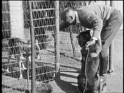 b/w mid1920s trainer lee duncan putting dog puppy behind fence as rin tin tin watches / newsreel - one mid adult man only stock videos & royalty-free footage