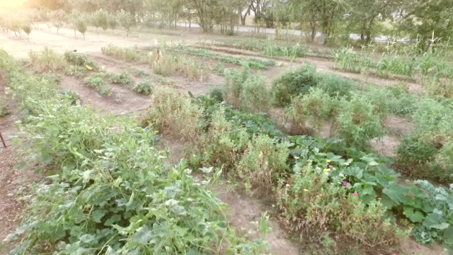 mid-air view of small vegetable farm with fruit orchard in the distance - mid distance stock videos & royalty-free footage