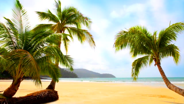 midday on the tropical beach - midday stock videos & royalty-free footage