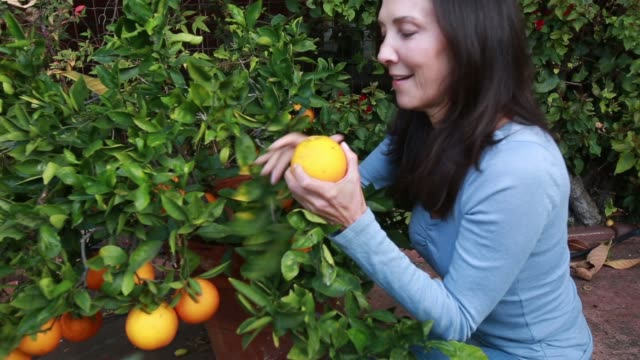 middle age woman picking an orange - choosing stock videos & royalty-free footage