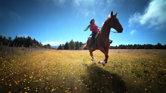 middle aged woman riding horse through field of flowers, oregon - 乗る点の映像素材/bロール