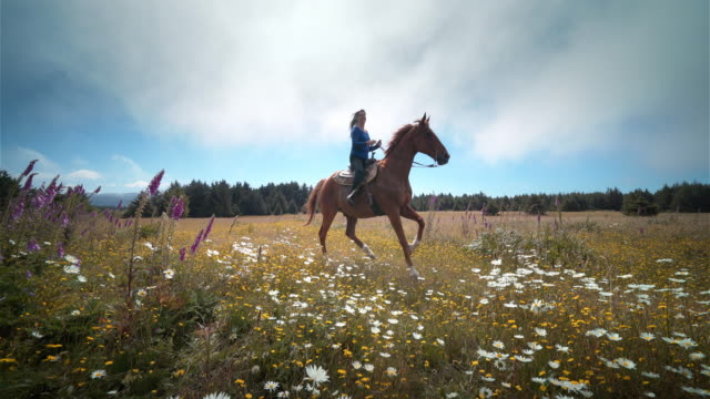middle aged woman riding horse through field of flowers, oregon - cowgirl stock videos & royalty-free footage