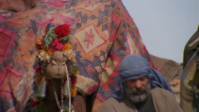 cu, td, middle east, bedouin leading camel through desert - middle eastern ethnicity stock videos and b-roll footage