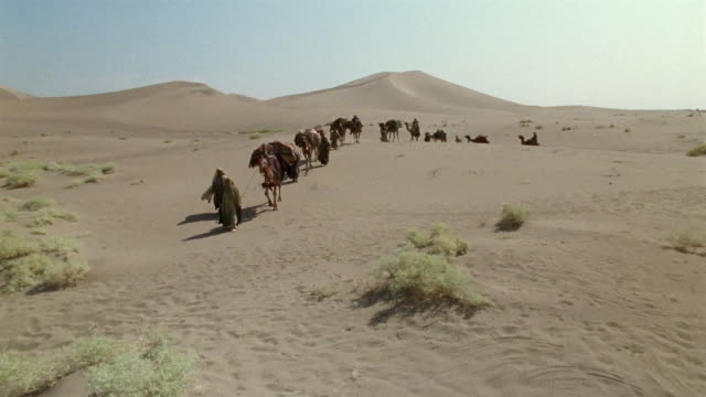 CS, Middle East, Bedouins leading camels through desert