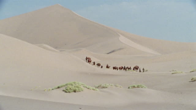 ws, middle east, camel train traveling through desert - unknown gender stock videos & royalty-free footage