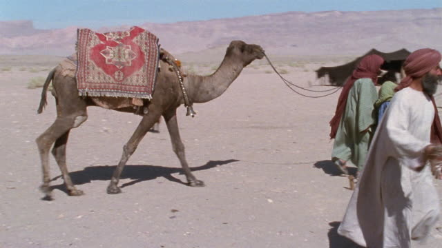 ms, pan, middle east, nomadic people in desert camp - reenactment stock videos and b-roll footage