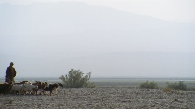 vidéos et rushes de ws, pan, middle east, two shepherds herding flock of goats and sheep in desert - dry clothes
