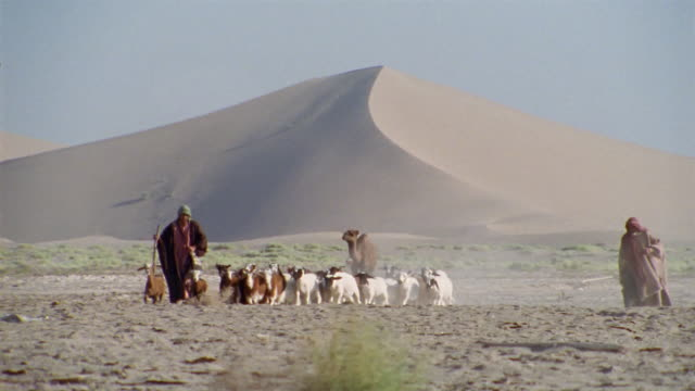 ws, middle east, two shepherds herding flock of goats in desert - shepherd stock videos & royalty-free footage