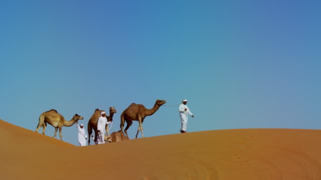 vídeos de stock, filmes e b-roll de middle eastern dromedary camels on safari desert arabia - adereço de cabeça