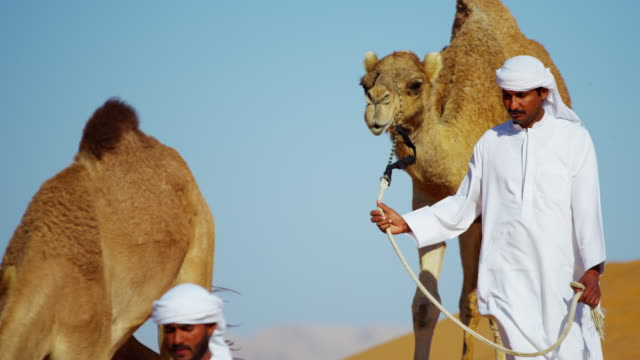 stockvideo's en b-roll-footage met middle eastern dromedary camels on safari desert arabia - perzische golf